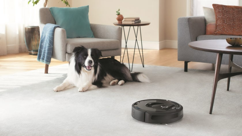 House Cleaning for Dog Owners