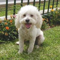 Redondo Beach Dog Rescue