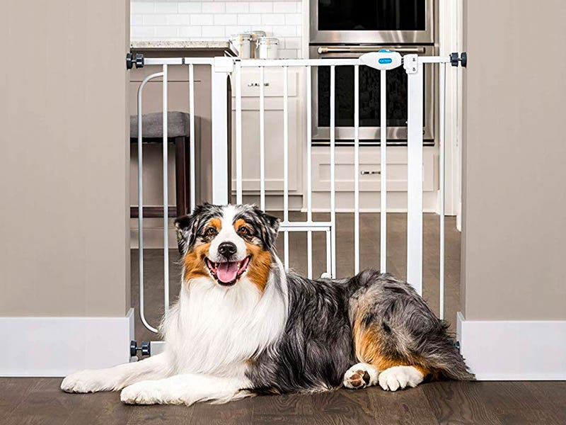 gates create healthy boundaries for dogs in the home